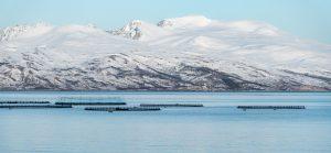 Fischzucht am Meer in Norwegen mit vereisten Bergen im Hintergrund